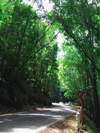 caoba: Este hombre hizo forestal es una de las atracciones en Bohol, Filipinas. También es conocido como el bosque de caoba. Muy previsor plan de las autoridades para reducir la huella de carbono. Foto de archivo