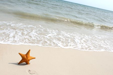 A starfish besides sea shore on a beach with white sand and blue water. Stock Photo - 6774954