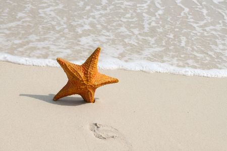 A starfish besides sea shore on a beach with white sand and water. Stock Photo - 6775002