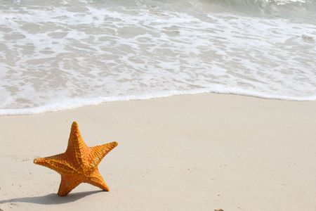 A starfish besides sea shore on a beach with white sand and water. Stock Photo - 6854501