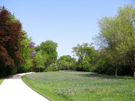 country park: Paisaje de bosque verde con cielo azul brillante Foto de archivo