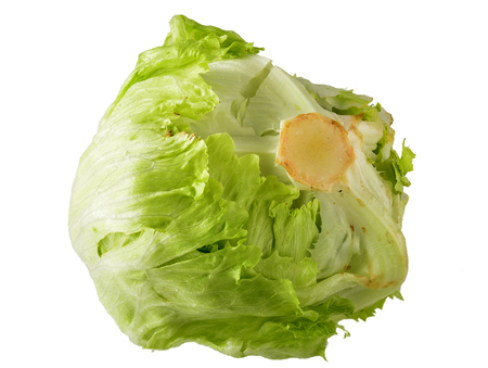 Iceberg Lettuce with Clipping Path.