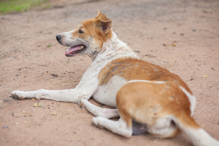 Sad dog recumbent on the ground Standard-Bild