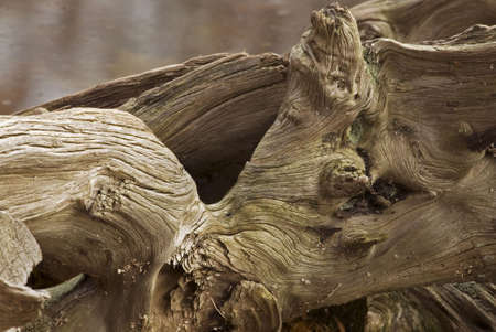 The stump of a tree around the pond at St. Johns Conservation area in Fonthill, Ontario, Canada.