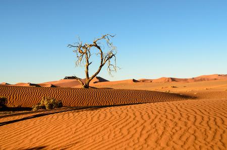 namib: Sand dunes of the Namib desert
