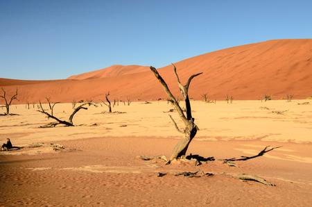 namib: Famous Dead viel in the Namib