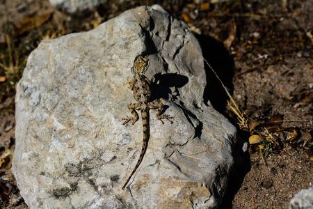 basking: Lizard basking in the sunshine