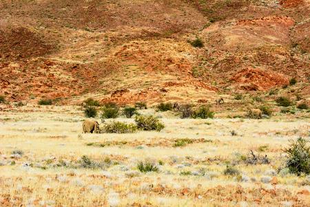 paisaje safari africano con los elefantes del desierto Foto de archivo