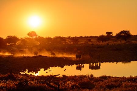 waterhole: Zebra at a waterhole in Etosha at dusk