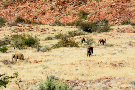 natural habitat: Natural habitat of Desert Elephants
