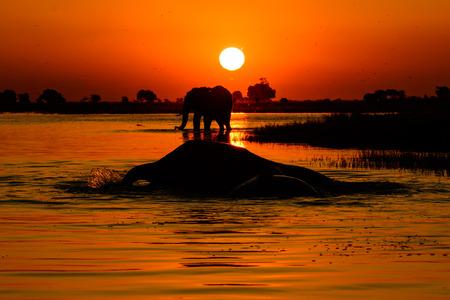 big 5: African Safari sunset Stock Photo