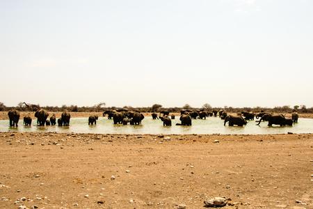 pozo de agua: Elephants galore at a waterhole