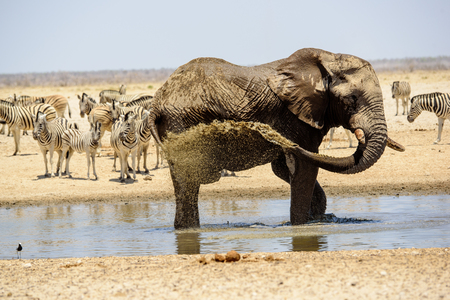 pozo de agua: Water fun for an elephant at the waterhole