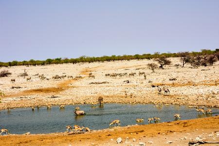 waterhole: animals at a waterhole Stock Photo