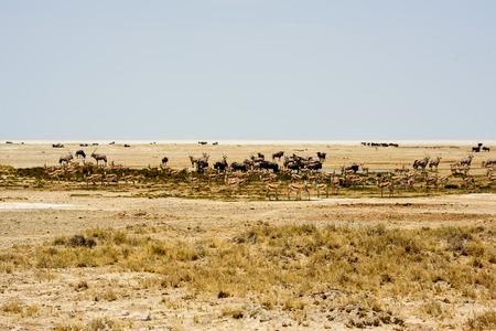 pozo de agua: African safari wildlife waterhole landscape