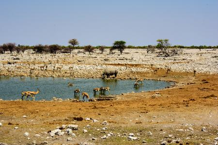 pozo de agua: waterhole wildlife viewing in Etosha Foto de archivo