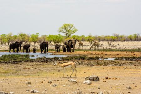 waterhole: Small group of elephants at a waterhole Stock Photo