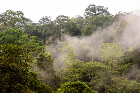 early morning mist in the rainforest of Boeneo