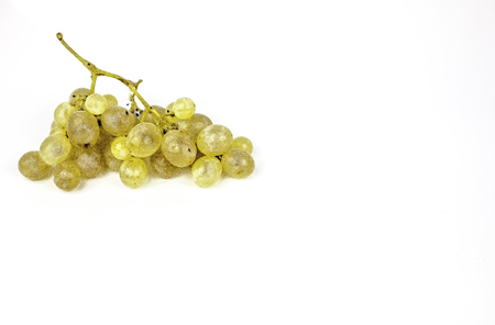 bunch of grapes II