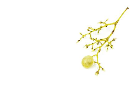 single grape in bunch