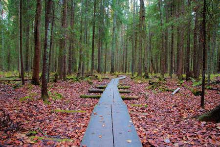 duckboards: Duckboards in forest