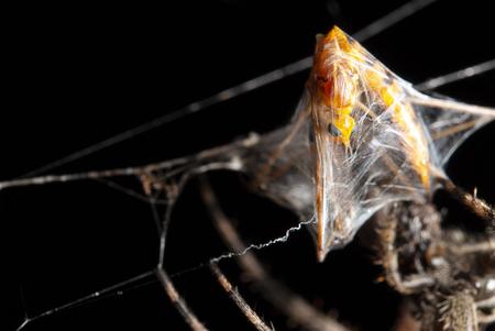 Bug being eaten by spider Standard-Bild