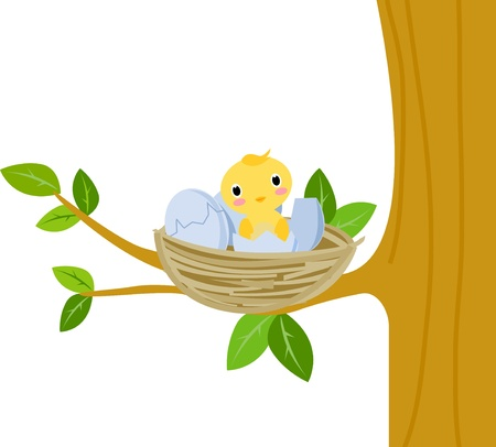 animal nest: Nest with baby birds