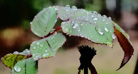 Green tears Stok Fotoğraf