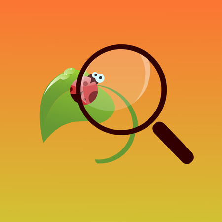 Cute lady bug sitting on a leaf under a magnifying glass Vector
