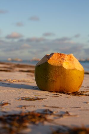 Vertical photo of an open coconut full of sand in the middle of a beach during the reddish sunset