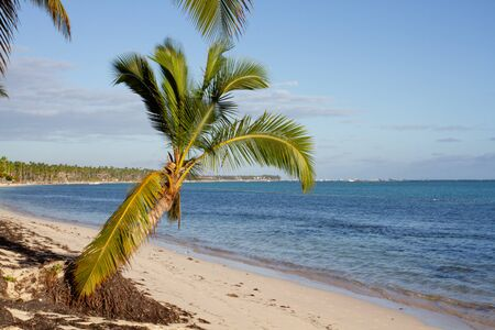 Small palm tree in the middle of the white sand beach and turquoise sea water on a sunny day Banque d'images