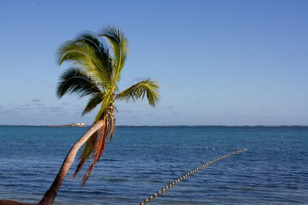 Small palm tree in front of the sea with some buoys that delimit the water