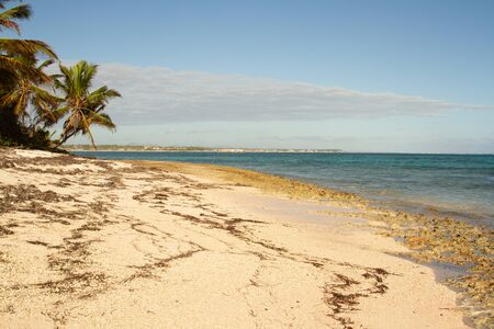 White sand beach with seaweed and palm trees in front of a calm sea ina sunny day