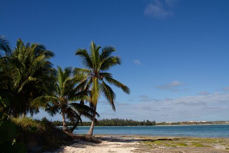 Palm trees in the middle of the white sand beach and turquoise sea water with the view of the coastline on a sunny day