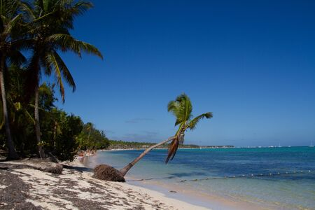 People taking the sun in a beach in a white sand beach with palm trees and turquoise sea water with the view of the coastline on a sunny day Banque d'images