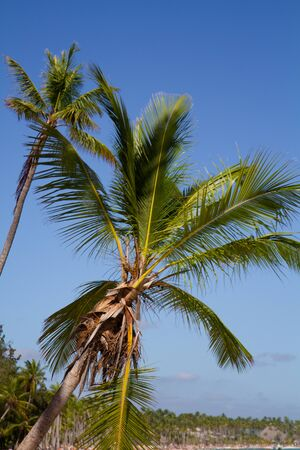 Vertical photo of two palms with a blue sky on a sunny day and the beach on the background