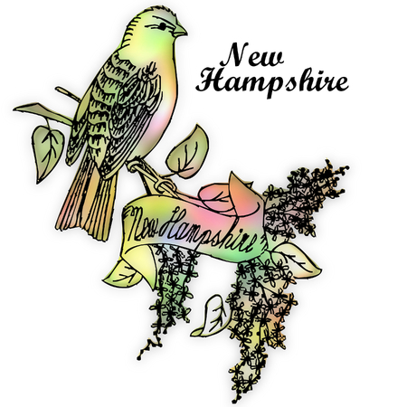 hampshire: Nueva Hampshire p�jaro del estado Foto de archivo