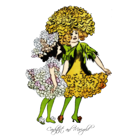eps picture: Candytuft and Marigold Illustration