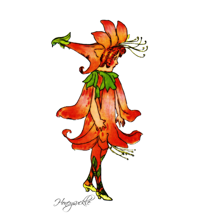 honeysuckle: Honeysuckle Illustration