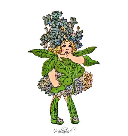 milkweed: Milkweed