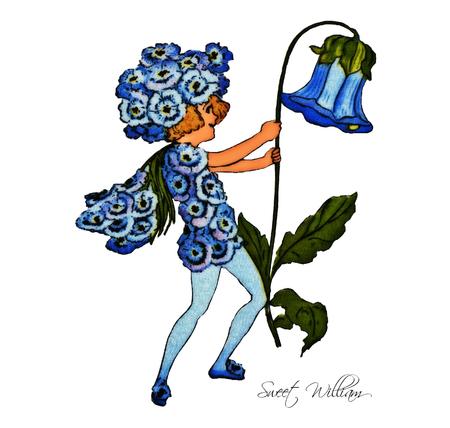 william: Sweet William Illustration