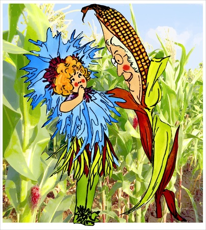 corn flower: Corn Flower Stock Photo