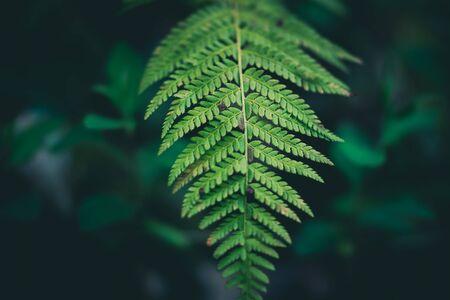 Intense green fern leaves
