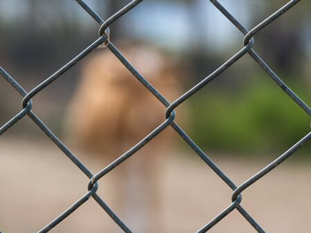 Detail of a metal mesh with a blurred cow in background