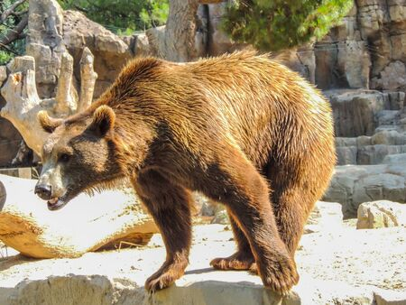 Sad animals deprived of their freedom in a zoo Stock fotó