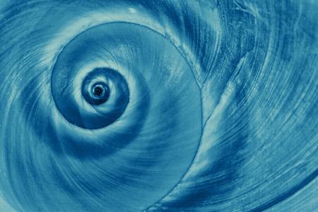 푸른 달팽이의 나선형