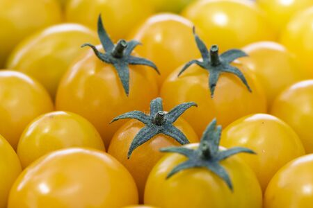 Harvest of cherry tomatoes. Yellow cherry tomatoes