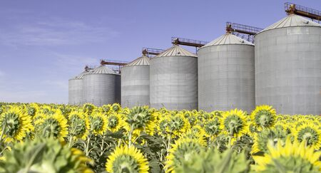 seed silo with sunflowers and blue sky. agri-food industry