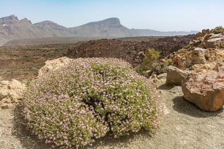Teide National Park occupies the highest area of the island of Tenerife (in the Canary Islands) and Spain. Banco de Imagens