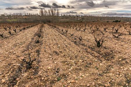 Vineyards in San Pedro de Ceque in Zamora in autumn, vineyards denomination of origin valleys of Benavente (Castilla y Leon, Spain) Stockfoto